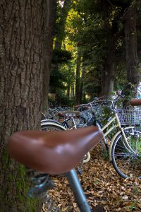 bikes-parked-under-trees-near-tokyo-photo-by-morgan-avery