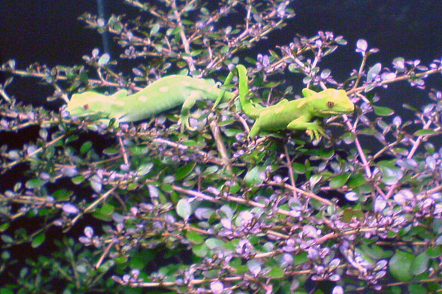 Museum Lizards