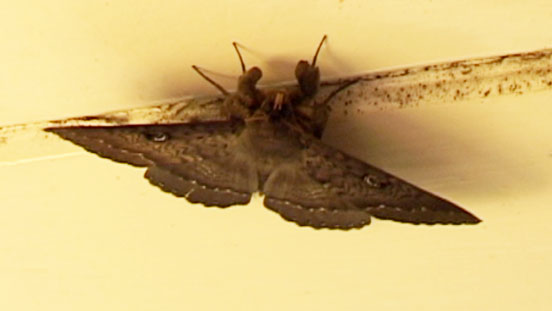 The Moth's Under-carriage